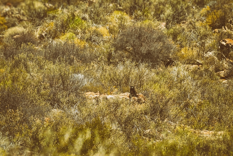 baboon land memories, II - Westkap - christofkessemeier | ello