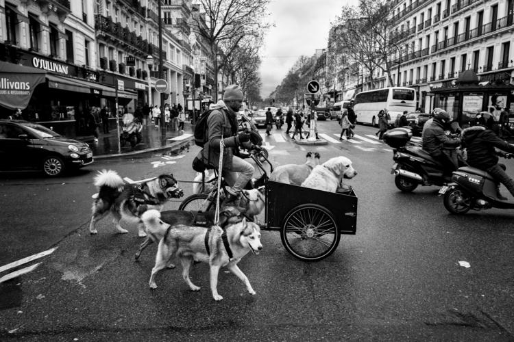 paris, streetphotography, dogs - laurent_delhourme | ello