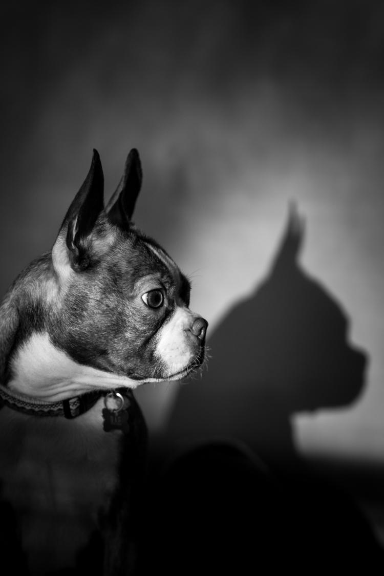 Shadow Profile - monochrome, puppy - mbstuart | ello