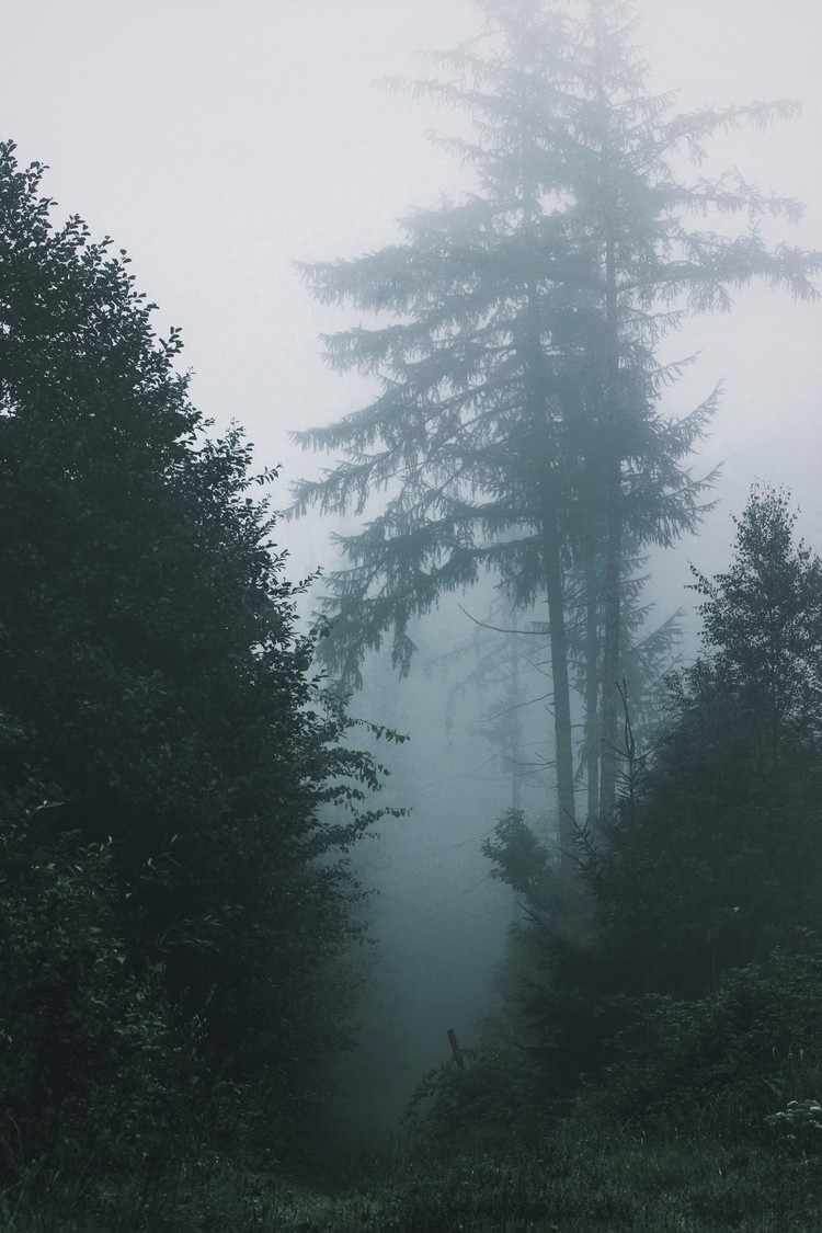 love moody Forrest - nature - timmee_y | ello