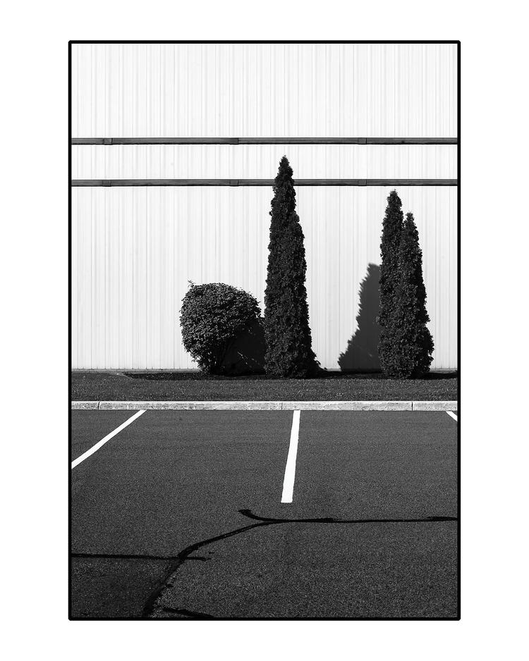 Parking Lot Trees - photography - patrickchuprina | ello