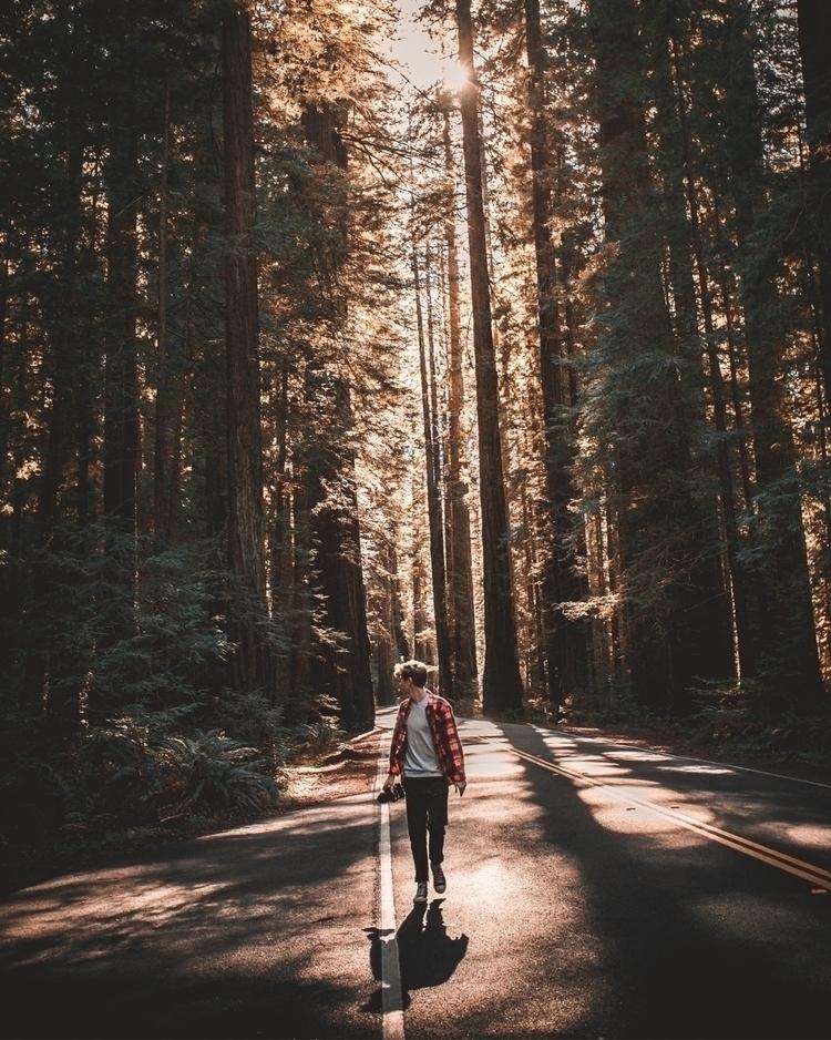 walk avenue - woods, nature, shots - huntrex_ | ello