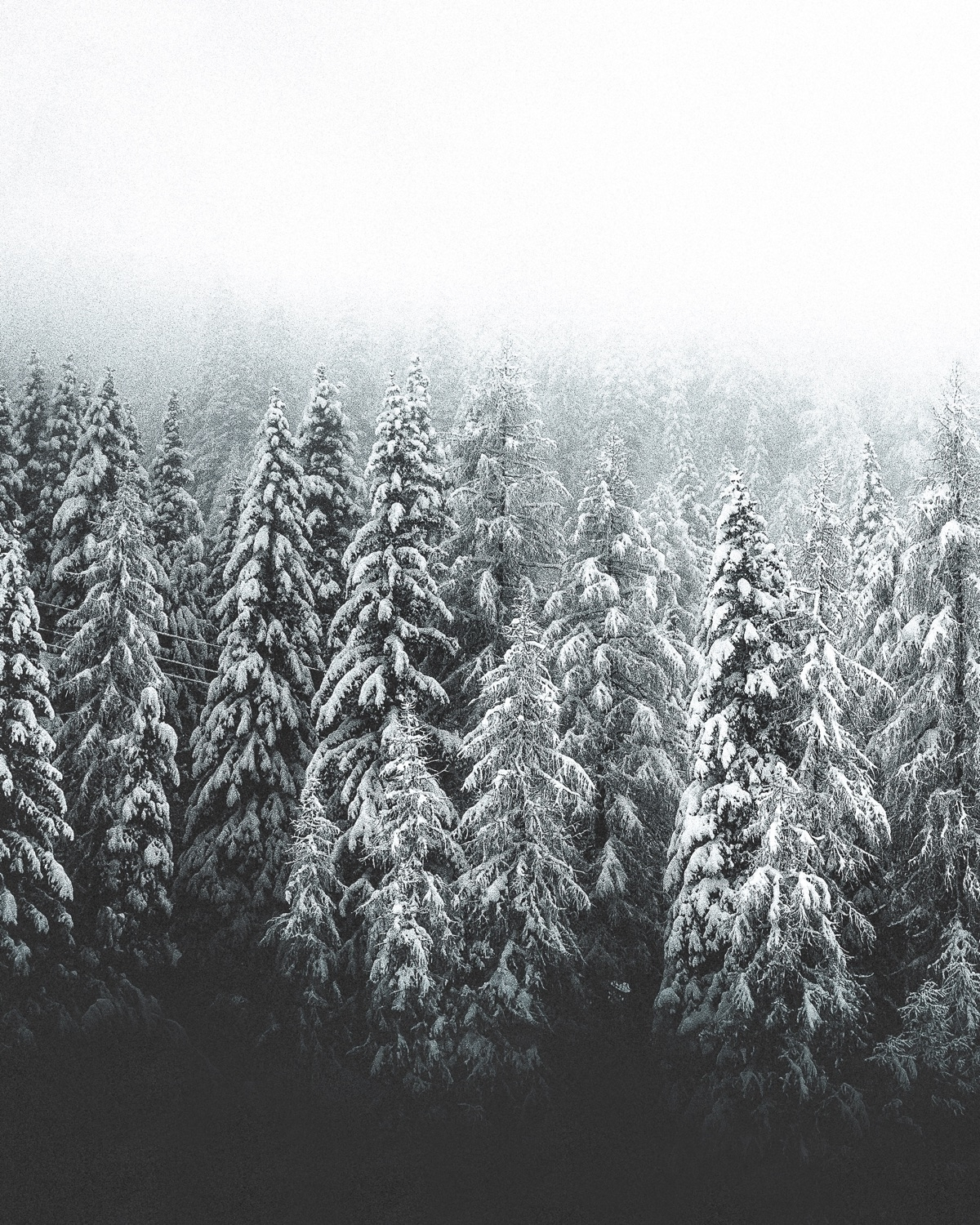 mood heart. Finnish, time snow  - douglasfir | ello