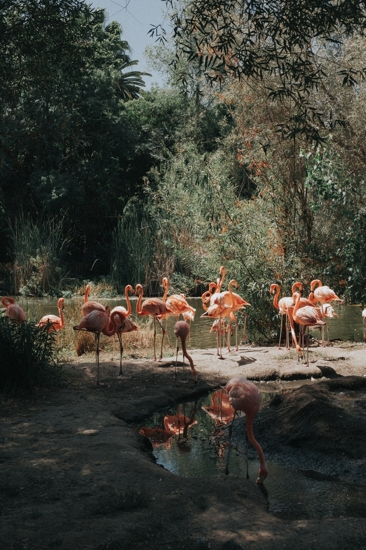 Sacramento zoo - sacramento, animals - joelfoust | ello