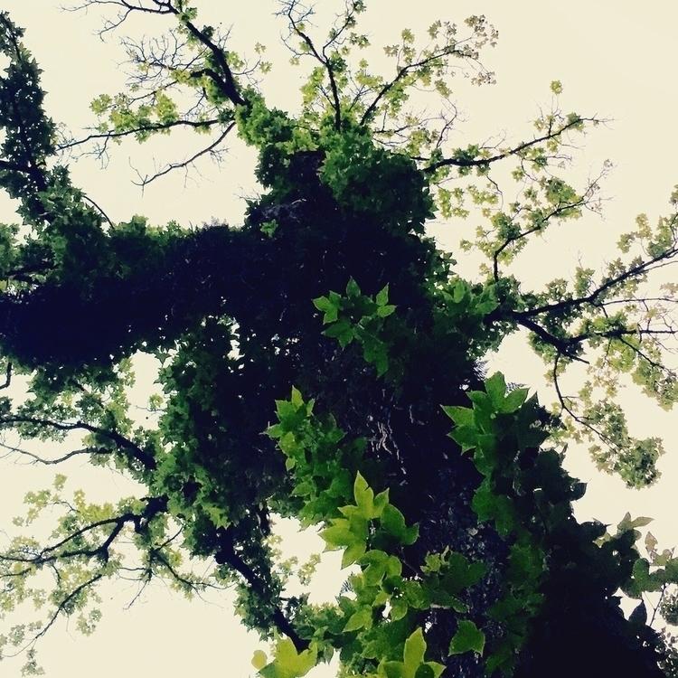 trees - bjl710806   ello