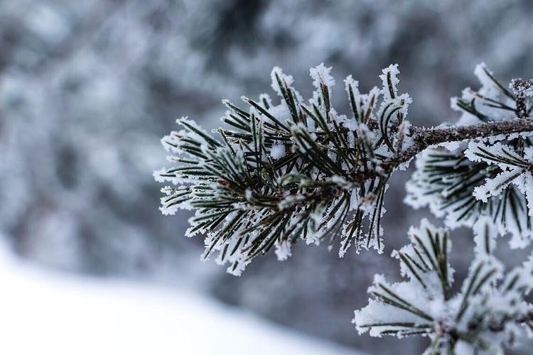 Snow Madrid :snowflake:️  - Nieve - inmaphotographs | ello