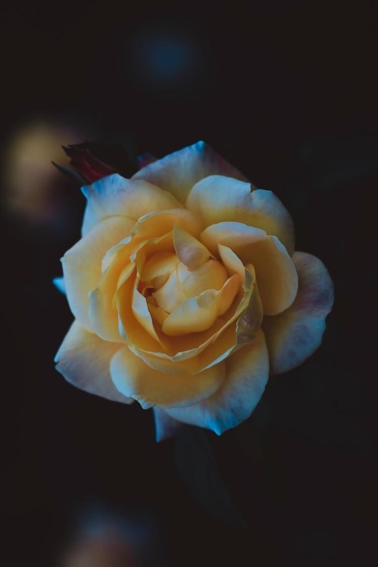 Jocelyn flores - dontcuttheroses | ello