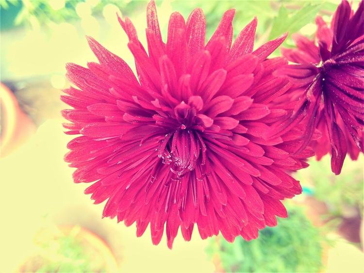 Happiness radiates fragrance fl - manojmasoom | ello