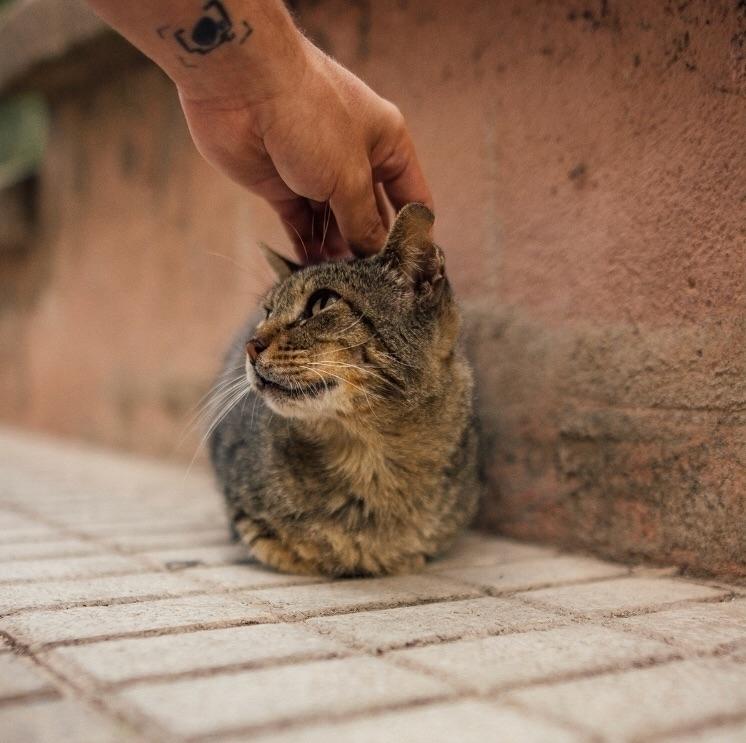 Gato  - adrishameless | ello