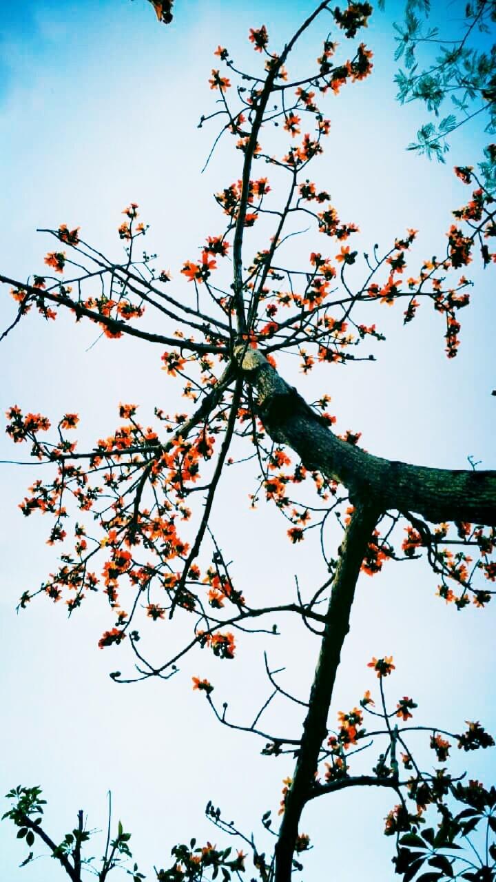 distance, parts - trees, flowers - manojmasoom | ello