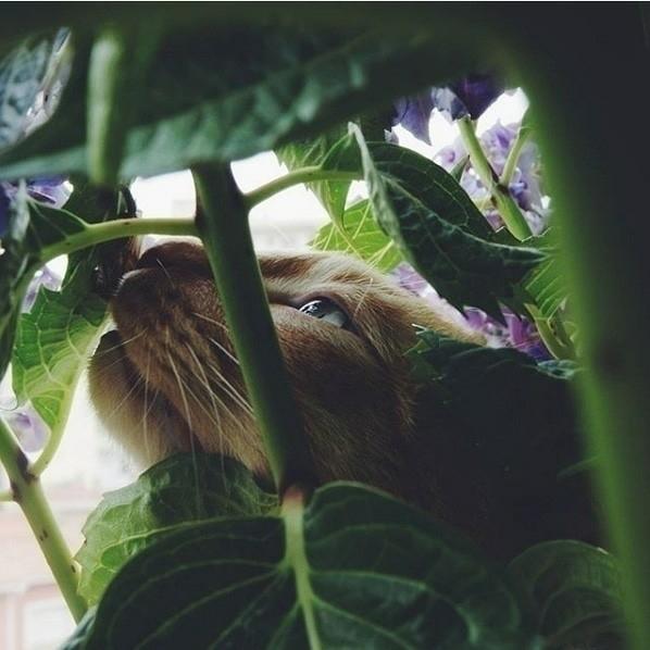 Wild Cat - ThecatCat, vscowild, vscocat - patrivg7 | ello