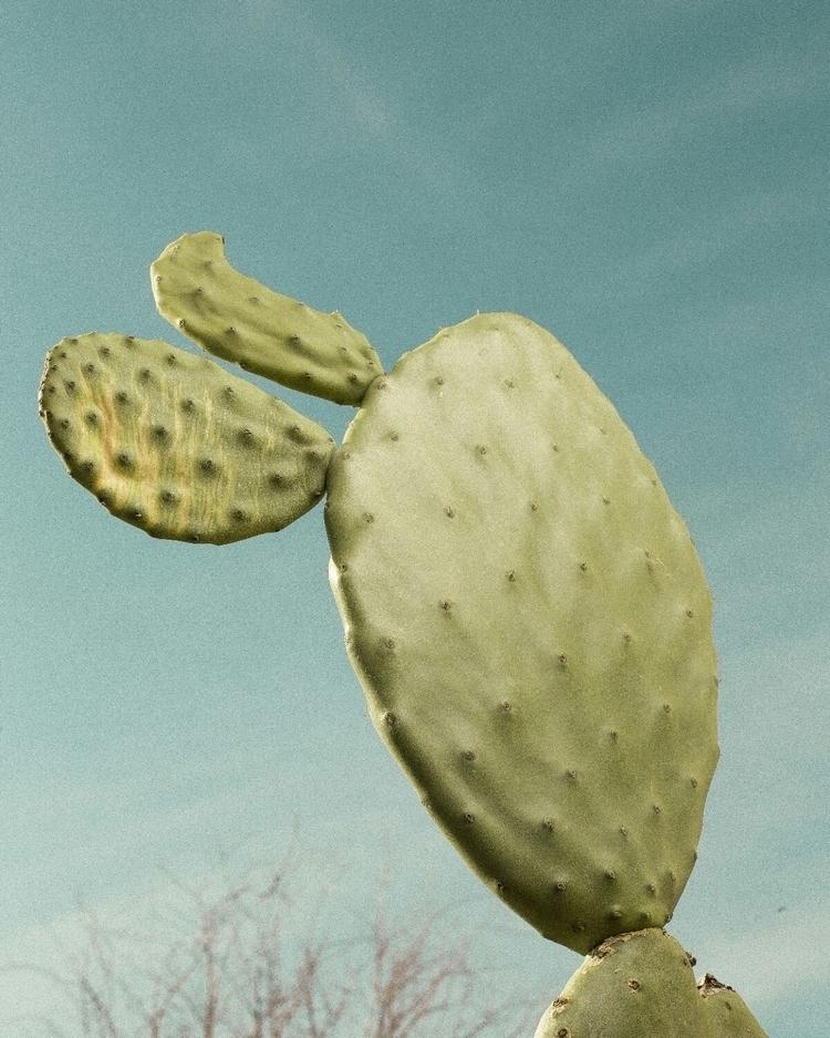 es una planta cualquiera tío - danielvaldemoro | ello
