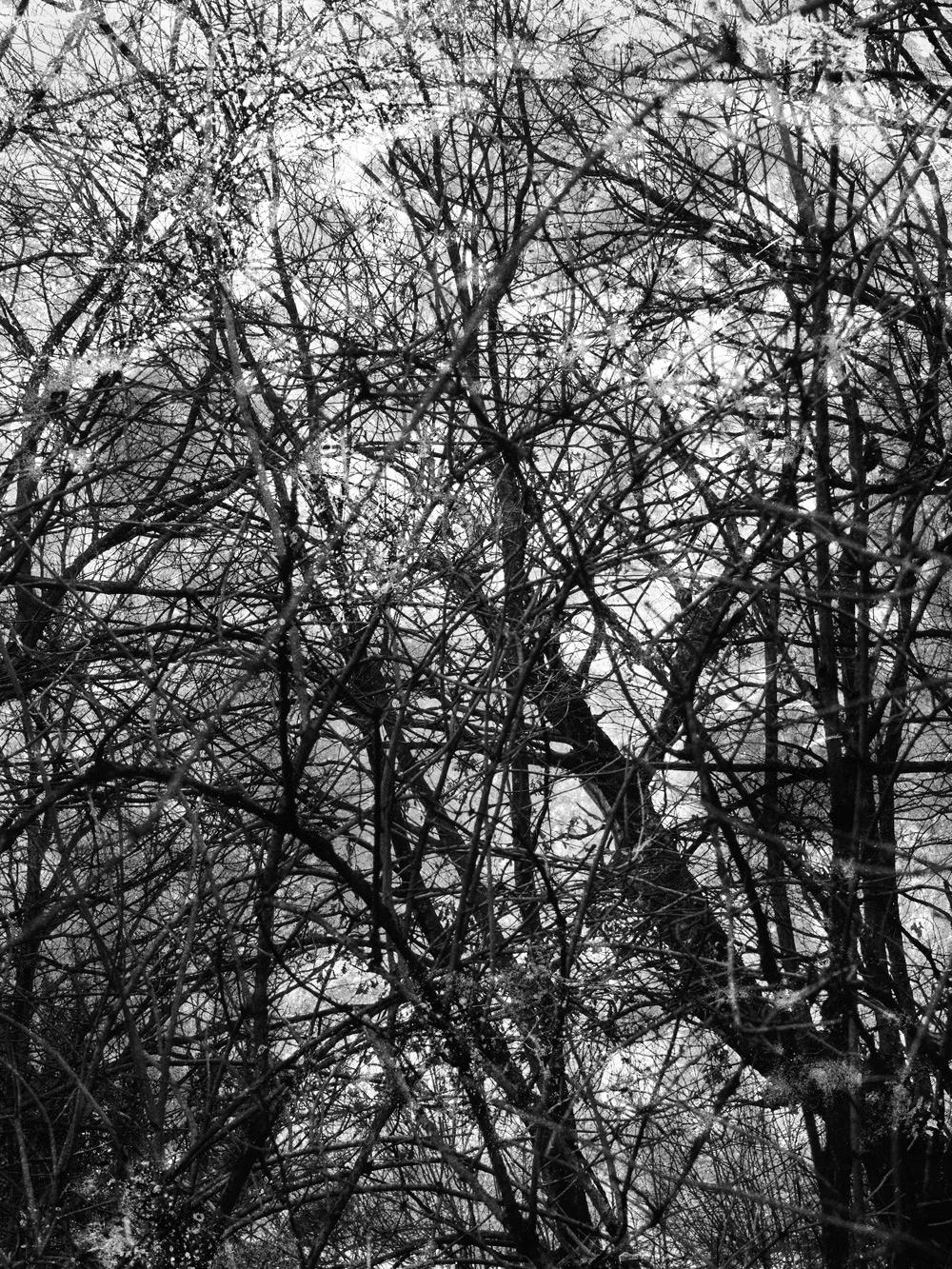 series Bosco. Colin Dutton - landscapephotography - cdutton | ello