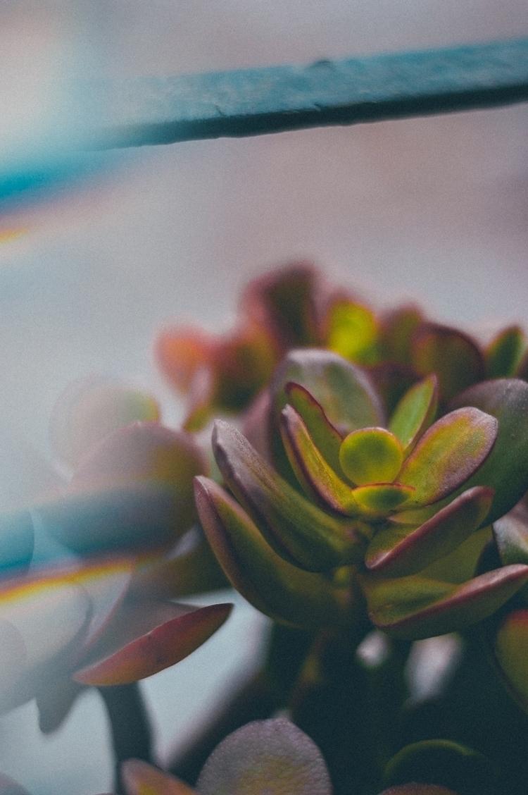 flowers, analogic, analog, analogic - joellloret | ello