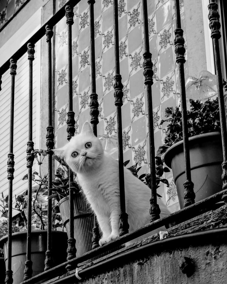 streetphotos, streetphotography - gilbyvm | ello