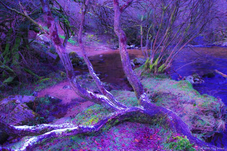 colourbox nature - 001 publicat - paulgillard | ello