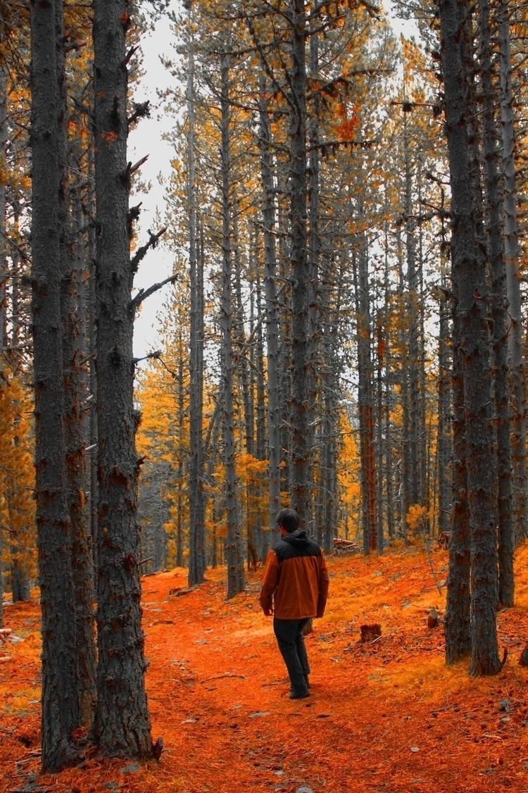 Forest live - andorra, orangeteal - hector_artist | ello