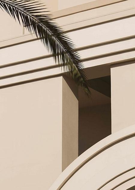 Palm - graphic, minimal, photography - francois_aubret   ello