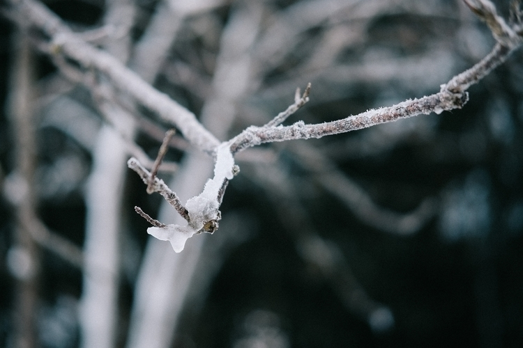 Branch - fujifilm, snow, photography - yooyye | ello