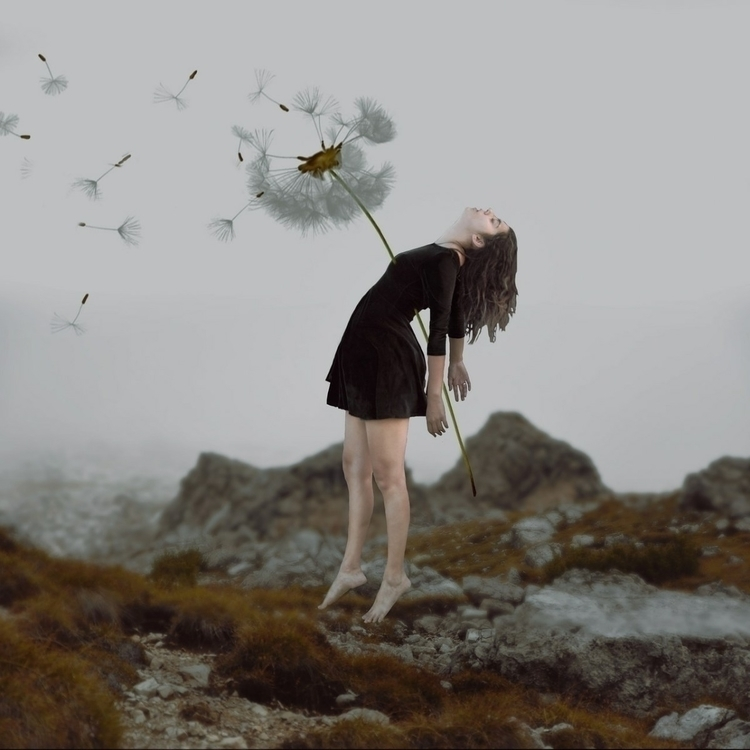 dientedeleon, flower, flor, fly - kathychareun | ello