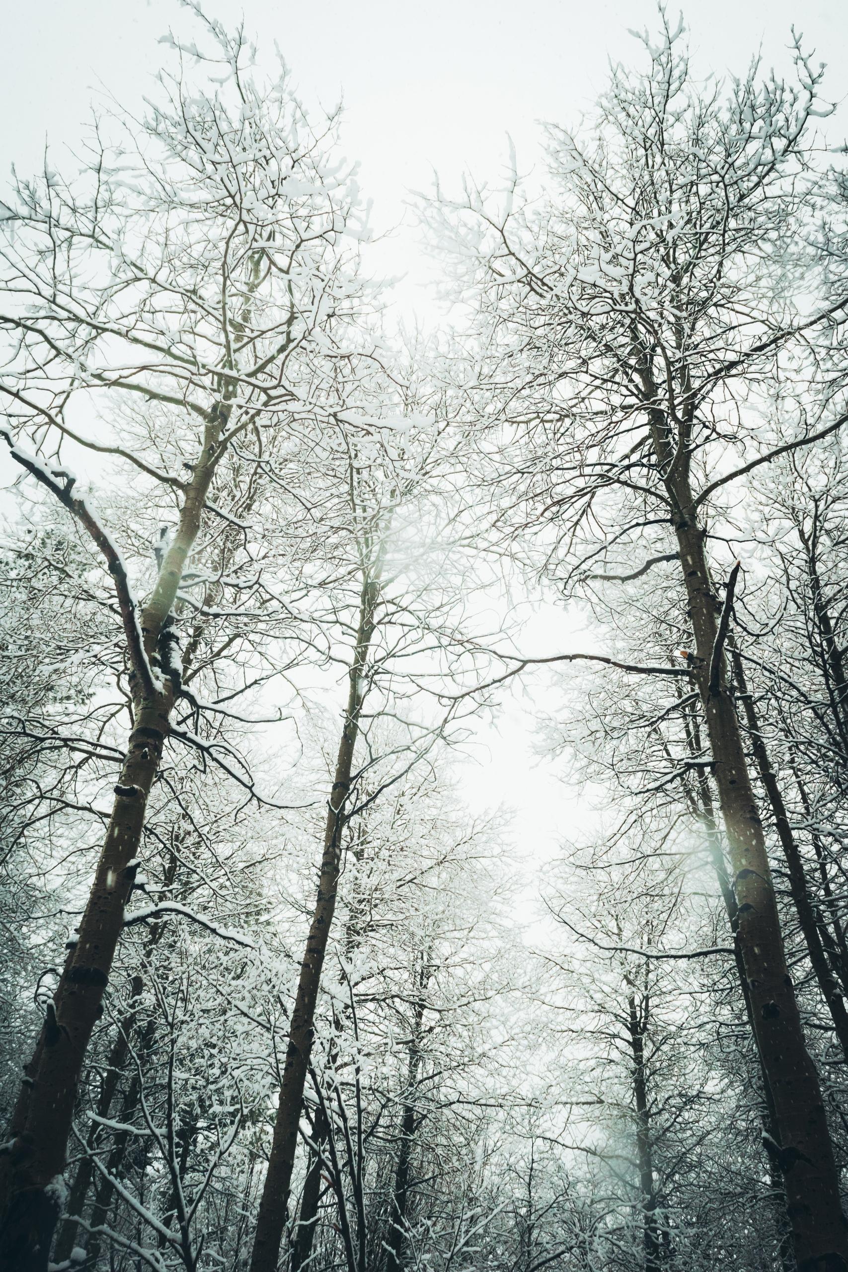 Frozen trapped winter forest. s - brotherkehn | ello