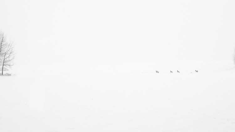photography, art, winter, snow - maksmj | ello