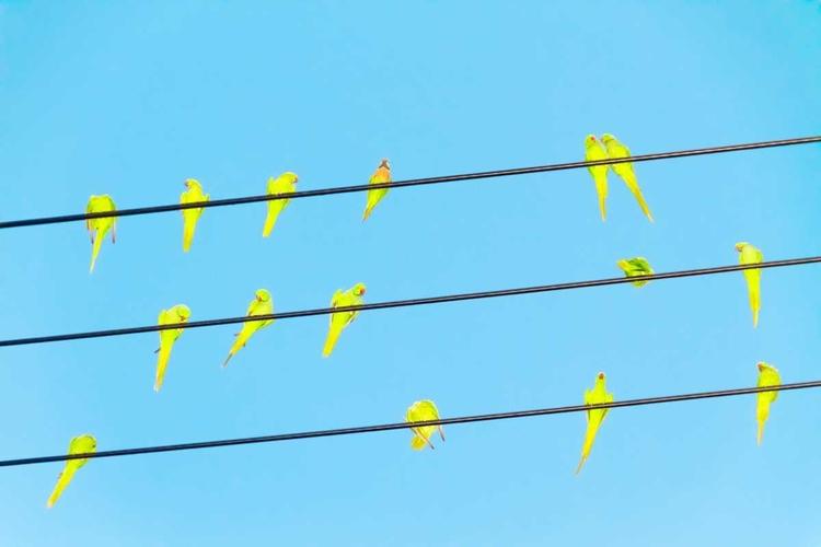 Yoshinori Mizutani - Tokyo, Parrots - photogrist   ello