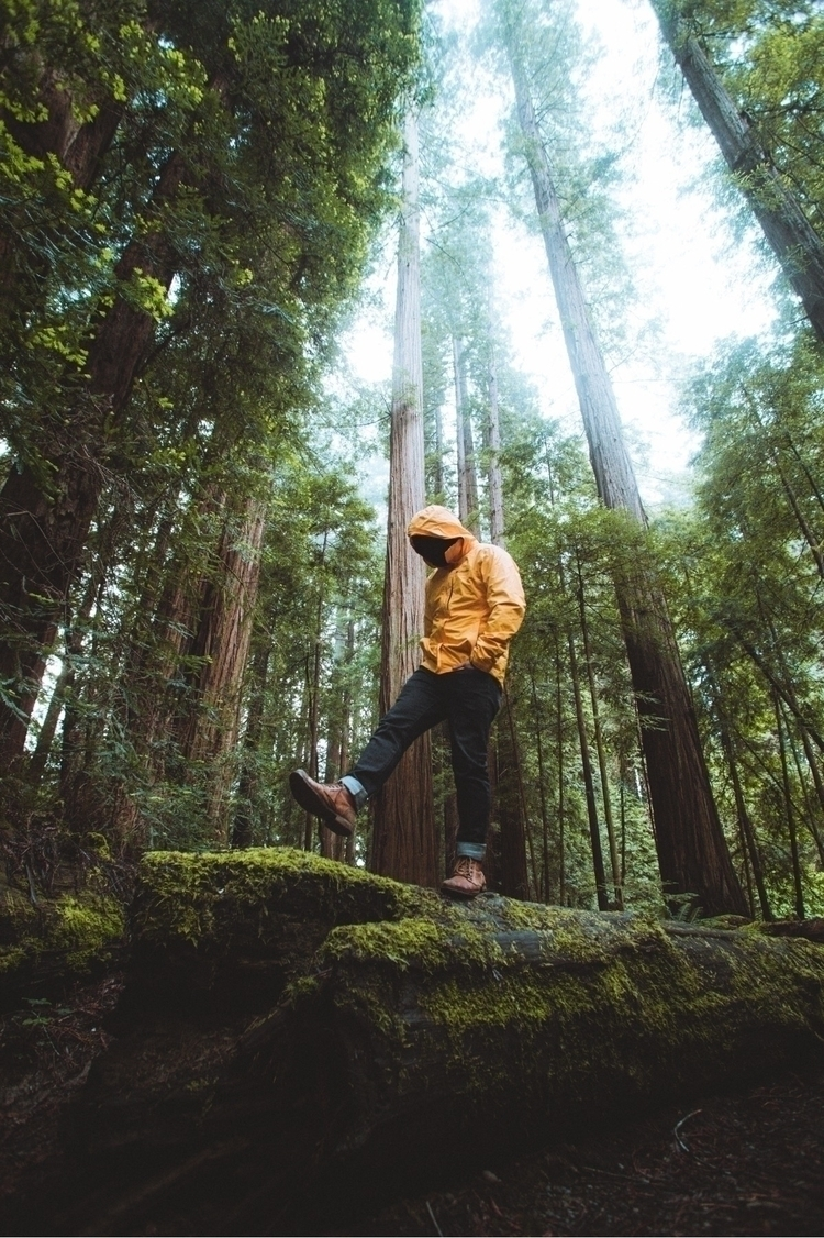 Moody morning Redwoods. Norther - mike_sap | ello