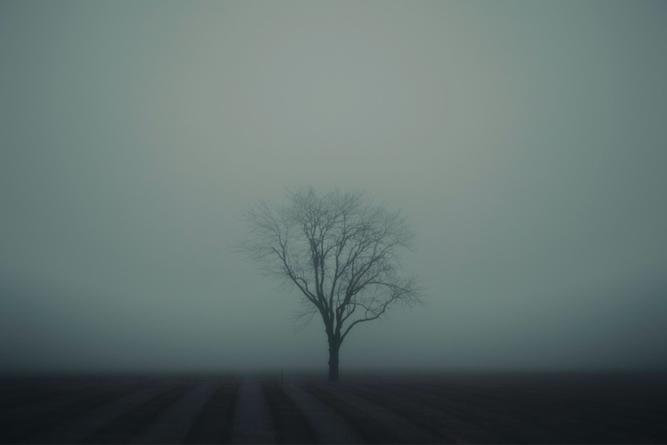 tree, landscape, fog, blue, night - nickraz00 | ello