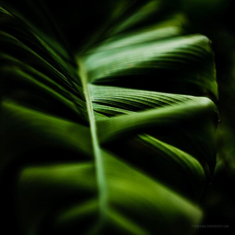 Botanic Gardens - Singapore - paulperton | ello