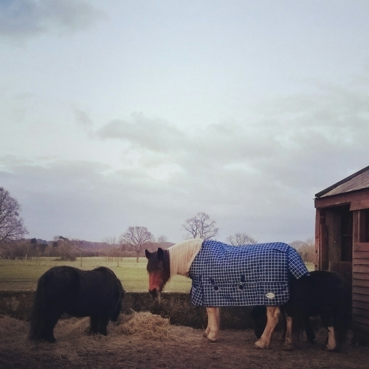 coat - pony, horse, cosy, cute, blanket - estelleclarke | ello