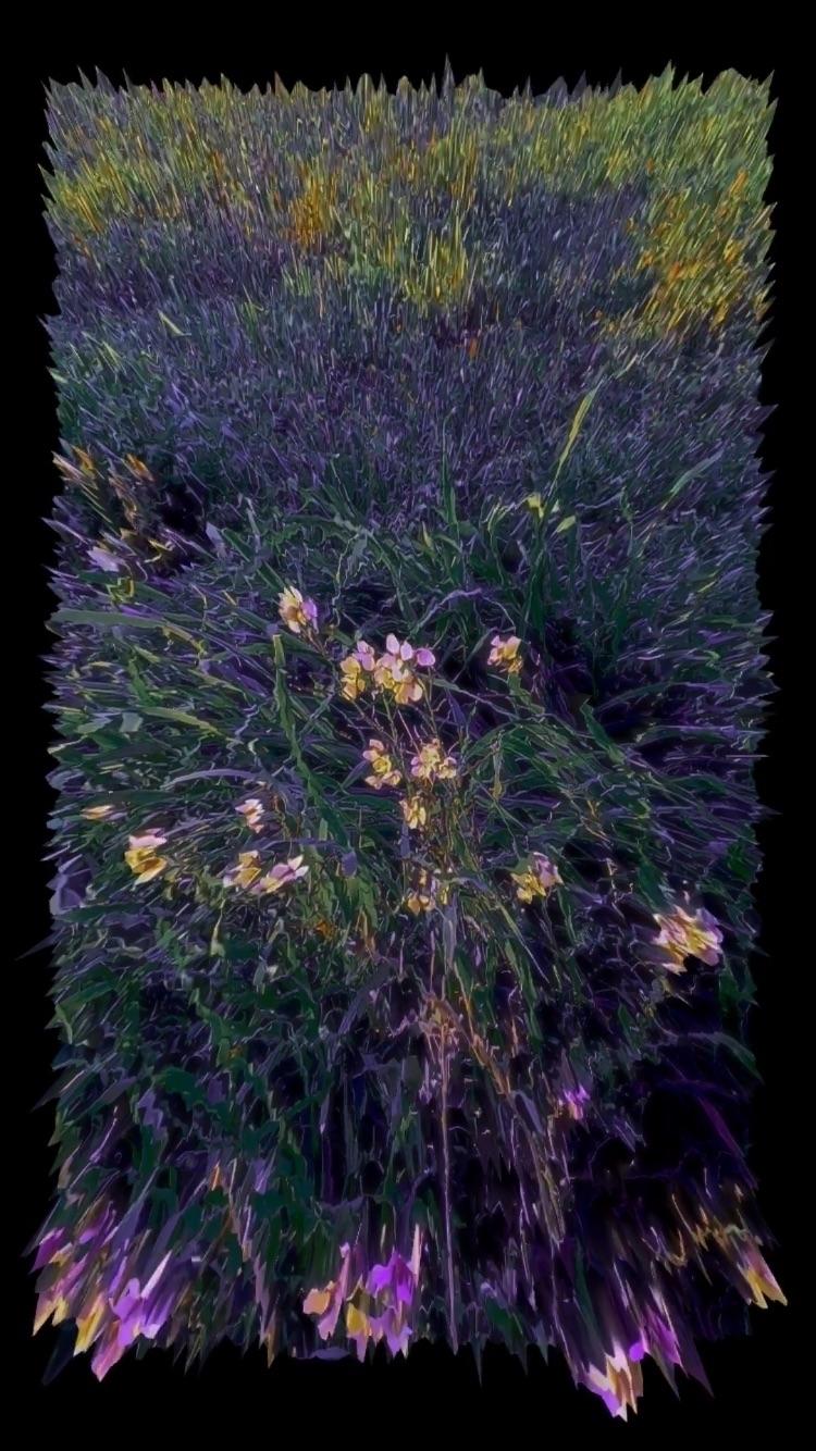 grass#plot, sunset#daisy, construct - morekid | ello
