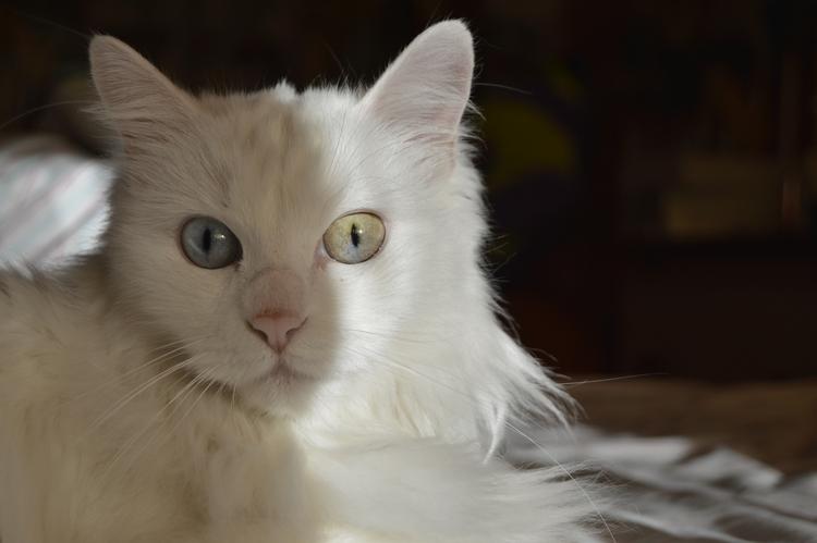 Heterochromia - photography, portrait - silviahgmez | ello