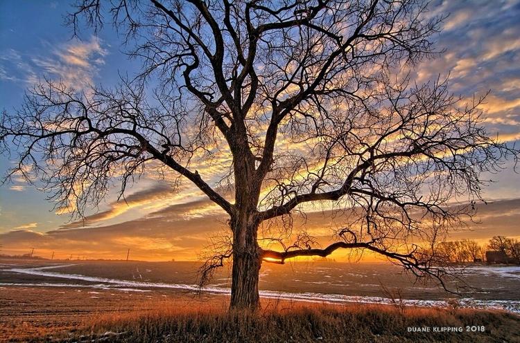 Cottonwood Sunrise rural Butler - bonfire_photography | ello