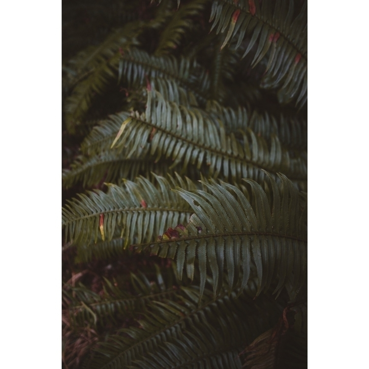 Forest greens - ivankosovan | ello