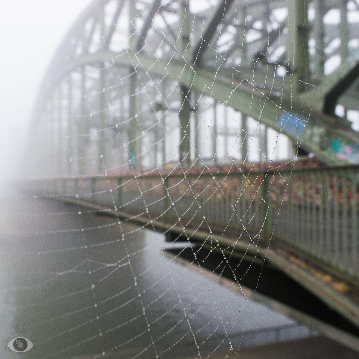 Spiderwebs dew Hohenzollerbruck - pentaxke | ello