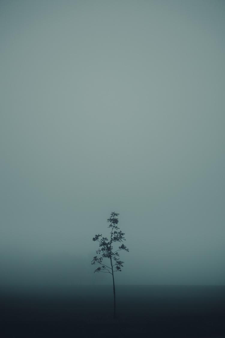 Small - tree, nature, blue, fog - nickraz00 | ello