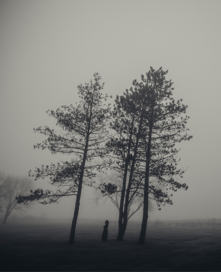 LOST 01 - fog, trees, angles, black - nickraz00 | ello