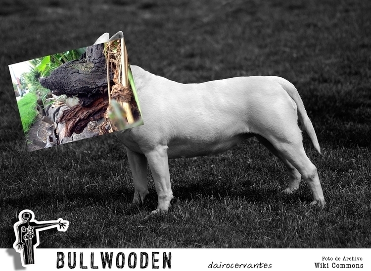 BullWooden - collage, conceptual - dairocervantes | ello
