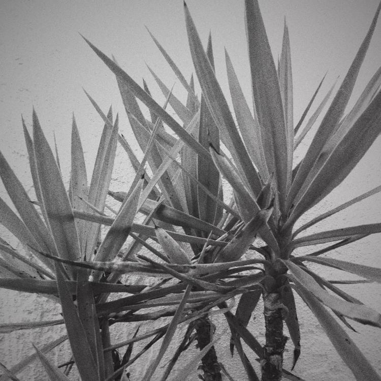 Mini Palm Trees Apps - mikefl99 - mikefl99 | ello