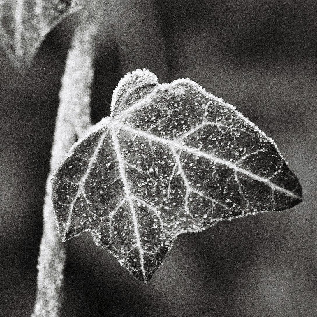 Frosty Veins, 2008 Shot Olympus - phil_levene   ello