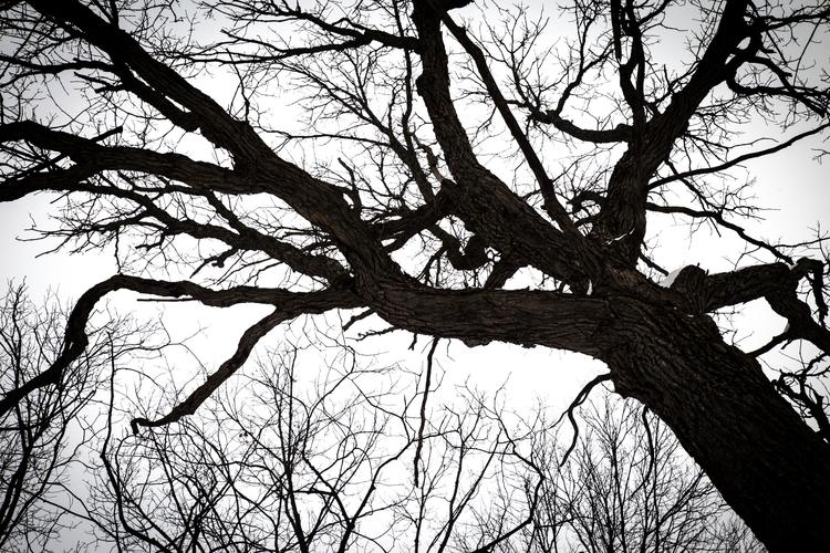 Tree flat grey sky - junwin | ello