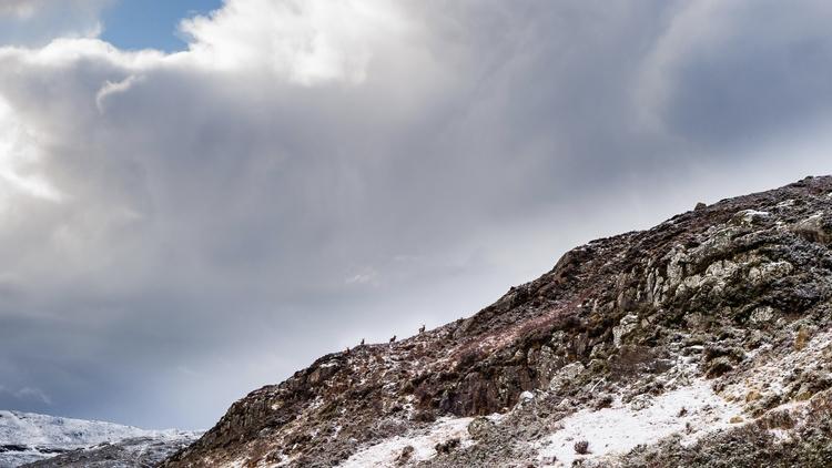 reddeer, deer, wildlife, winter - dfcf | ello