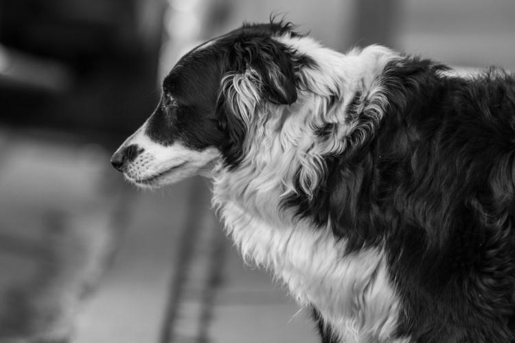 Dogs Telluride. shot mini-serie - ethandowning | ello