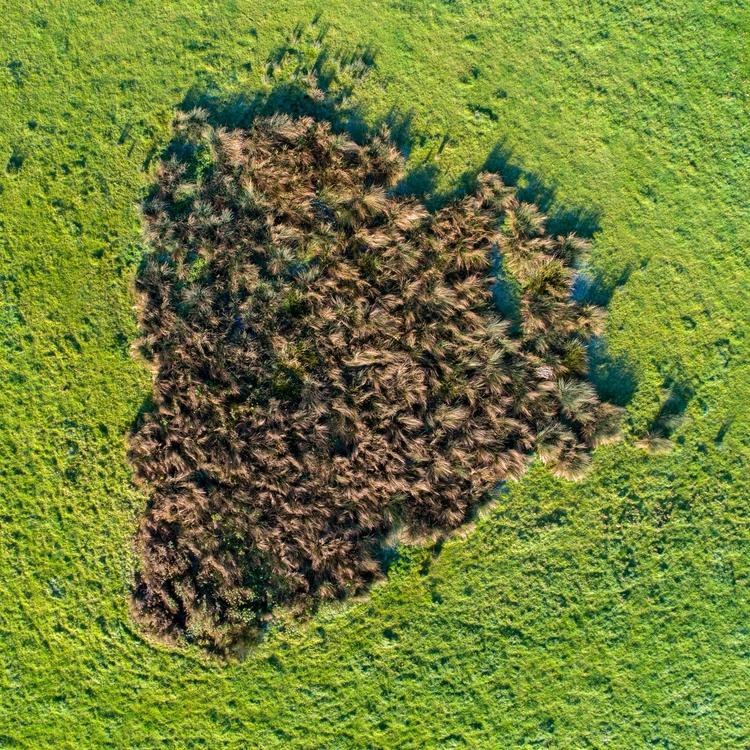 beautiful patch grass english c - alon | ello