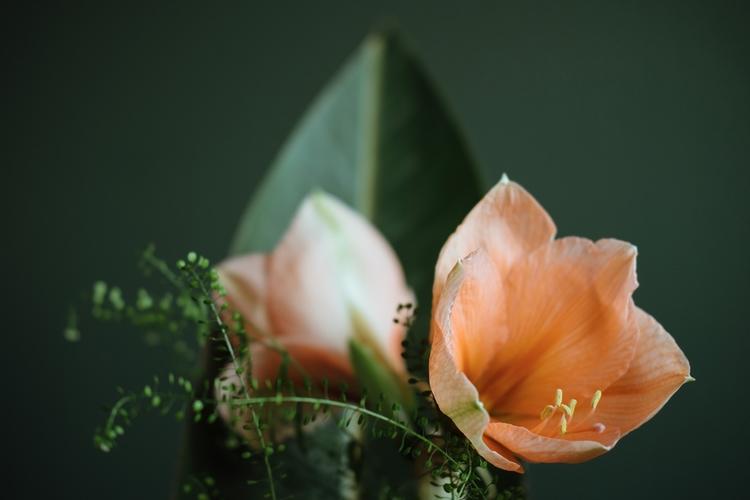 Botanical Series 1 - photography - timondegraaff | ello
