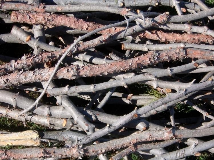 Afghan Pine Trimmings, 2018. no - williamrobertway | ello