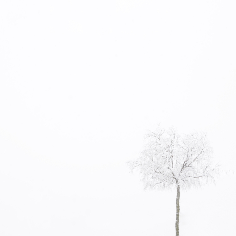 Nature white - Morella, winter, snow - jaquerol | ello