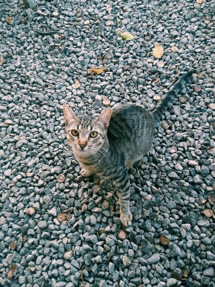 love cats - pedroantonionm | ello
