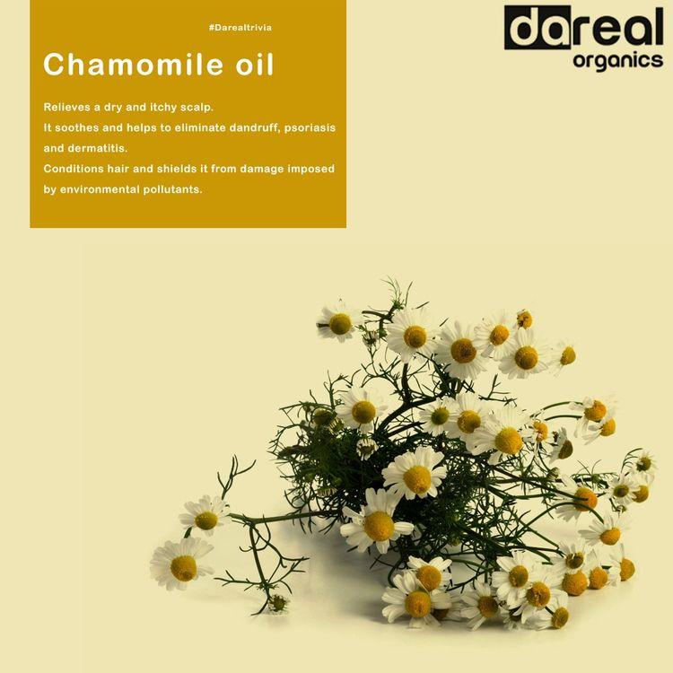 Chamomile oil - effective natur - darealorganics | ello